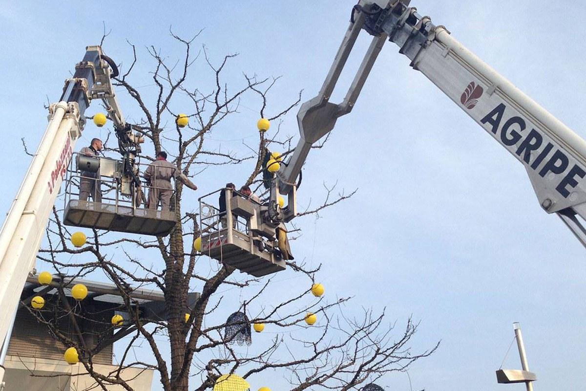 Pellegrini artisti degli alberi di natale più belli a civitanova