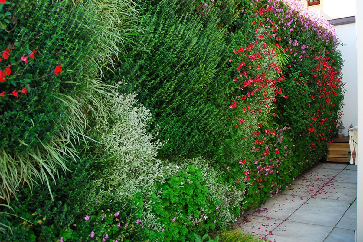Pareti Verdi Verticali Costi perchè scegliere un giardino verticale ~ pellegrini giardini