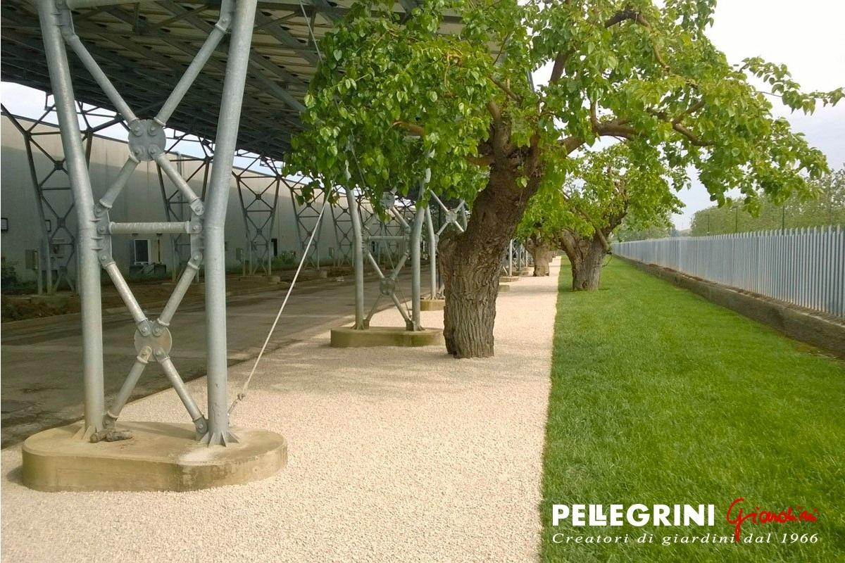 Vialetto giardino economico idee per la casa for Laghetto fai da te economico